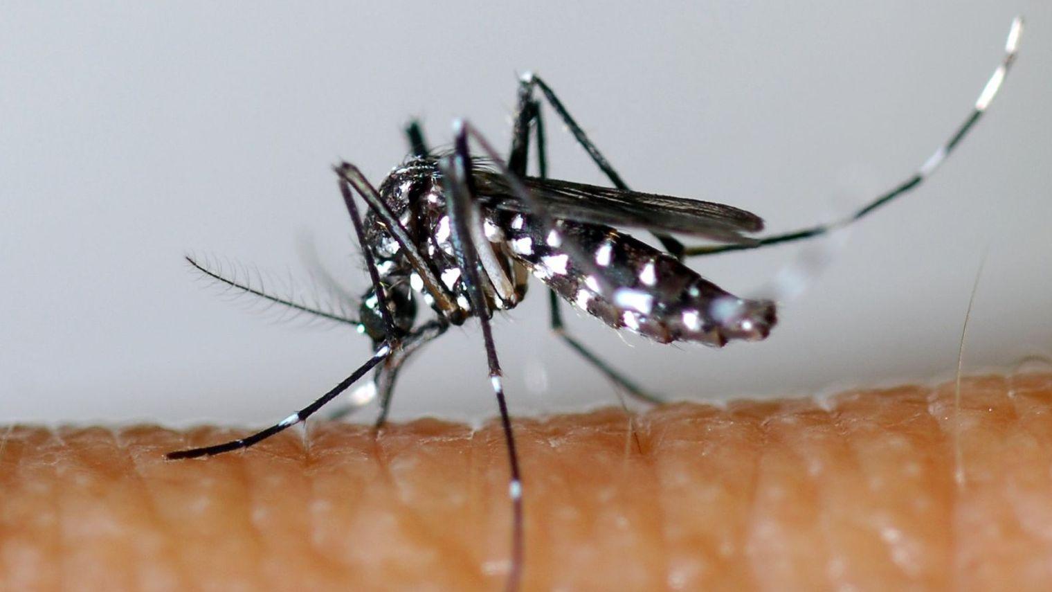 un-moustique-tigre_5017529
